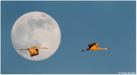Screen Shot 2012 10 30 at 6.04.04 PM 450x246 #Tog Feature: Russ Burden   10 Ways to Become a Better Photographer
