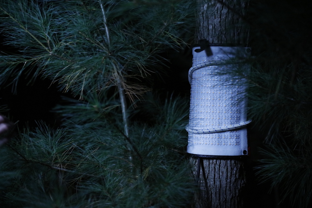 Lighting for Horror Film - Flex on a Tree