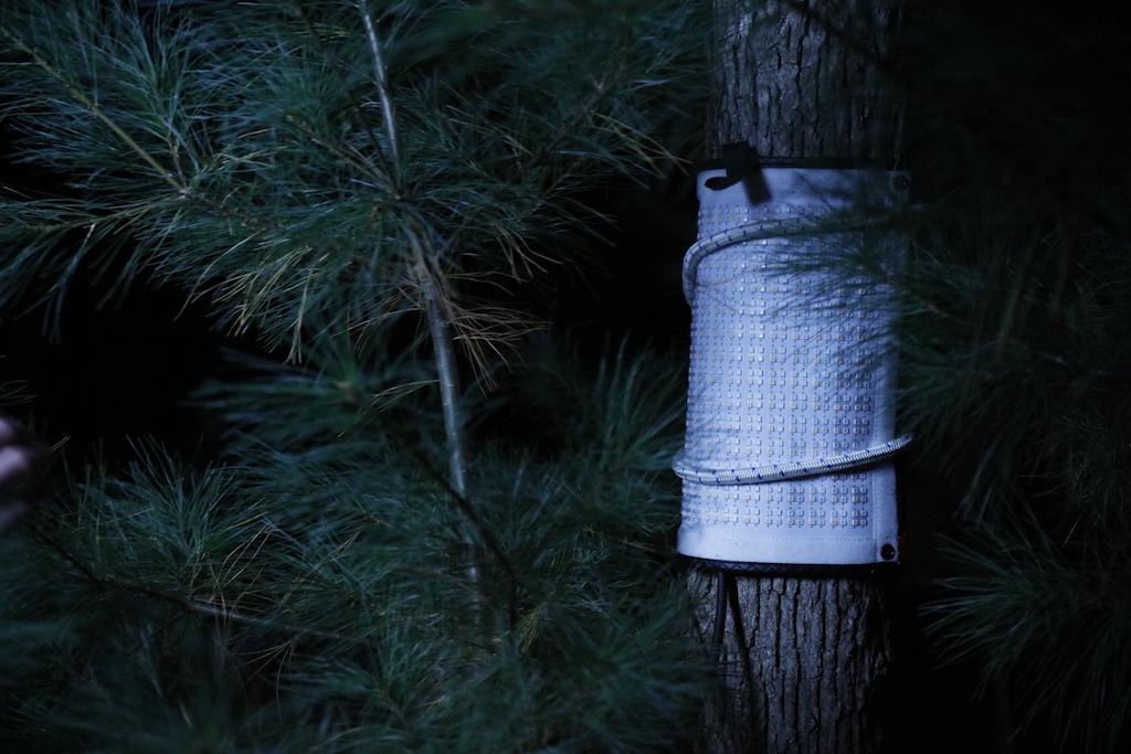 Lighting for Horror Film - Flex on a Tree